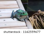 Perez's Frog. Close Up Profile...