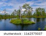 beautiful lake in rannametsa...   Shutterstock . vector #1162575037