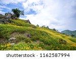 the orange daylily tawny... | Shutterstock . vector #1162587994