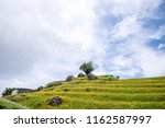 the orange daylily tawny... | Shutterstock . vector #1162587997