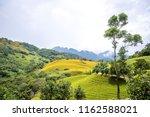 the orange daylily tawny... | Shutterstock . vector #1162588021