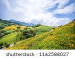 the orange daylily tawny... | Shutterstock . vector #1162588027