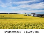 Blooming Canola Field And Farm...