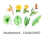 set of exotic leaves and... | Shutterstock . vector #1162613407
