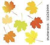 Autumn Maple Leaves. Vector...