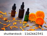 marigold or calendula essential ... | Shutterstock . vector #1162662541