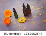 marigold or calendula essential ... | Shutterstock . vector #1162662544
