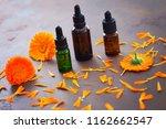 marigold or calendula essential ... | Shutterstock . vector #1162662547
