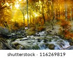 Autumn Creek Woods With Yellow...