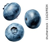 fresh blueberry isolated on... | Shutterstock . vector #116269834