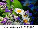 Close Up Of Summer Wildflowers...