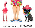 dog and owner ready to go on... | Shutterstock . vector #1162743007