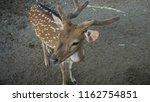 deer with beautiful antlers | Shutterstock . vector #1162754851