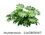 tropical green leaves plant... | Shutterstock . vector #1162805047