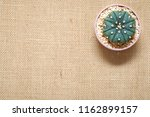 top view small green cactus... | Shutterstock . vector #1162899157