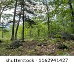 morning at the forest. keene... | Shutterstock . vector #1162941427