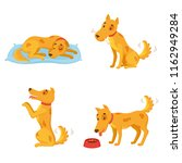 dog in different states.... | Shutterstock .eps vector #1162949284