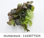 green and red leaf of lettuce... | Shutterstock . vector #1163077324