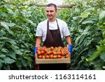 male farmer picking fresh... | Shutterstock . vector #1163114161
