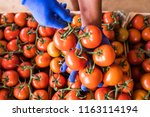 man hands choose tomatoes from... | Shutterstock . vector #1163114194