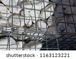 close up outdoor view of a... | Shutterstock . vector #1163123221