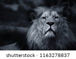the majestic head of great lion ... | Shutterstock . vector #1163278837