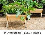 a green vegetable plants...   Shutterstock . vector #1163440051