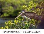 Galapagos Wildlife Ocean...