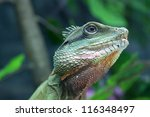 green water dragon or thai... | Shutterstock . vector #116348497