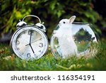 Stock photo rabbit sitting on the grass in the aquarium next big shiny watch 116354191