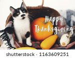 Stock photo happy thanksgiving text seasons greeting card thanksgiving sign cute kitty pumpkin wicker 1163609251