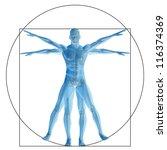 high resolution vitruvian human ...   Shutterstock . vector #116374369