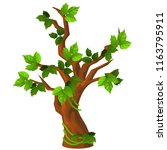 a deciduous tree with green... | Shutterstock .eps vector #1163795911