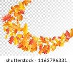 flying oak and maple leaf... | Shutterstock .eps vector #1163796331
