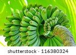 Green Ripening Bananas