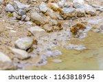 low angle closeup shot showing... | Shutterstock . vector #1163818954