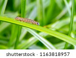 colorful lackey moth... | Shutterstock . vector #1163818957