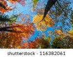 Vibrant Autumn Colors On A...