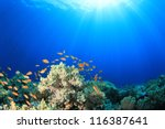 coral reef scene with tropical... | Shutterstock . vector #116387641