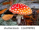 Red Spotted Toadstool In The...