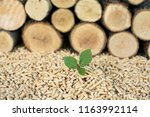 young beech tree in front of... | Shutterstock . vector #1163992114