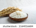 rice and rice ears | Shutterstock . vector #1164016684