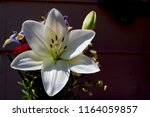 Beautiful Easter Lily  Flower...