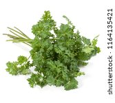 parsley leaves bunch isolated... | Shutterstock . vector #1164135421