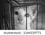 orphaned baby kitten innocent... | Shutterstock . vector #1164229771