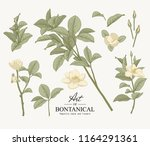 sketch floral botany collection.... | Shutterstock .eps vector #1164291361