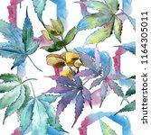 watercolor green cannabis...   Shutterstock . vector #1164305011