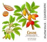 cocoa plant vector  | Shutterstock .eps vector #1164404494