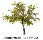 Green Apple Tree With Small...