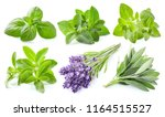 collection of fresh herbs on... | Shutterstock . vector #1164515527